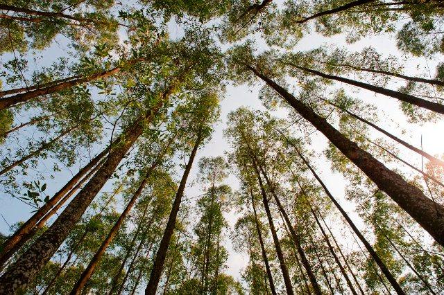 pohon-kayu