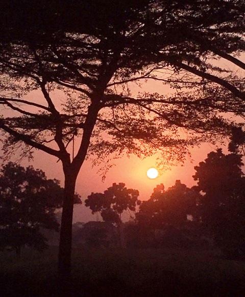 Dari bilik pepohonan, Matahari tiba tiba muncul menyapa diriku yang sedang bermain Golf di Royale Jakarta GC